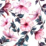 Nahtloses mit Blumenmuster des von Hand gezeichneten Aquarells mit dem zarten weißen und rosa Hibiscus blüht vektor abbildung