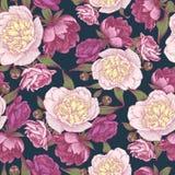 Nahtloses mit Blumenmuster mit den purpurroten und weißen Pfingstrosen Stockbild