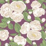 Nahtloses mit Blumenmuster mit Hand gezeichneten weißen Rosen auf violettem Hintergrund Stockbilder