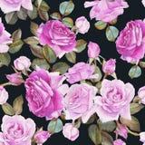 Nahtloses mit Blumenmuster mit purpurroten Rosen des Aquarells auf dem schwarzen Hintergrund Lizenzfreie Stockfotografie