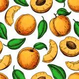 Nahtloses Muster der Aprikose Blumenhintergrund mit Gras Hand gezeichnete Frucht und Lizenzfreie Stockbilder