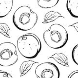 Nahtloses Muster der Aprikose ector Schwarzweiss-Hintergrund vektor abbildung