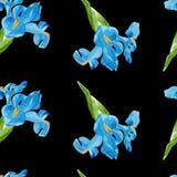 Nahtloses Muster der Aquarelliris Stockbilder