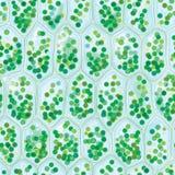 Nahtloses Muster der Chlorophyll-Zellen vektor abbildung