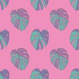 Nahtloses Muster der hellen Neonknickente färbte tropische Pflanzenblätter Schweizer Käse Windowleaf Monstera Deliciosa auf rosa  lizenzfreie abbildung