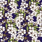 Nahtloses Muster der Kirschblüte Lizenzfreie Stockfotos