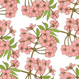 Nahtloses Muster der Kirschblüte Stockbild