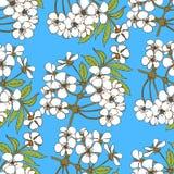 Nahtloses Muster der Kirschblüte Blumenmuster für textil Stockfoto