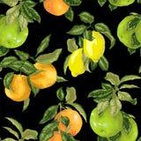 Nahtloses Muster in der realistischen Illustration des Vektors mit Pampelmuse, Orange, Pampelmuse und Zitrone in den hellen Farbe vektor abbildung