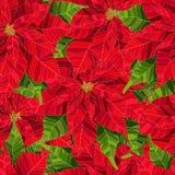 Nahtloses Muster der roten realistischen Vektor-Illustration der Poinsettiablume Lizenzfreie Stockfotos