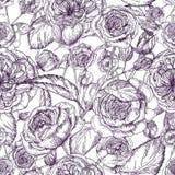 Nahtloses Muster der schönen ausführlichen pion-förmigen Rose Hand gezeichnete Blütenblumen und -blätter Schwarzweiss-Weinlese Lizenzfreie Stockfotografie