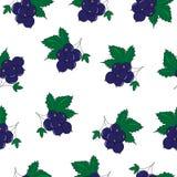 Nahtloses Muster der schwarzer Johannisbeere, Berry Pattern, Vektor-Illustration Stockbild
