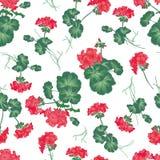 Nahtloses Muster der weichen roten Pelargonie Lizenzfreie Stockfotografie
