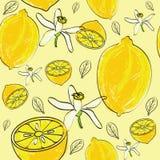 Nahtloses Muster der Zitrusfrucht Lizenzfreies Stockbild