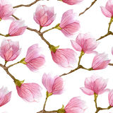 Nahtloses Muster des Aquarellfrühlinges mit dem blühenden Magnolienbaum lokalisiert auf weißem Hintergrund Stockfoto