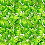 Nahtloses Muster des Aquarells Handgemalte Illustration von tropischen Blättern und von Blumen Tropisches Sommer-Motiv mit Liana  Lizenzfreies Stockbild