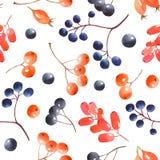 Nahtloses Muster des Aquarells mit Beeren lizenzfreies stockfoto