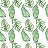 Nahtloses Muster des Aquarells mit tropischen Bl?ttern und Houseplantsbl?ttern gr?n saftig lizenzfreie abbildung