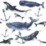 Nahtloses Muster des Aquarells mit Walen und Anker Handgemalte Verzierung mit Blauwal, Narwal, Schwertwal und Pottwal Lizenzfreies Stockfoto