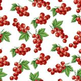 Nahtloses Muster des Aquarells rote Johannisbeer Stockfotos