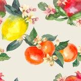 Nahtloses Muster des Aquarells von lokalisierten Hand gezeichneten Orangen, von Granatapfel, von Zitrone und von Blumen in der Sk stock abbildung