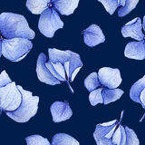 Nahtloses Muster des blauen Hortensieaquarells Lizenzfreie Stockbilder