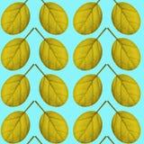 Nahtloses Muster des Gelbs verlässt auf einem blauen Hintergrund Lizenzfreies Stockbild