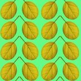 Nahtloses Muster des Gelbs verlässt auf einem grünen Hintergrund Stockfotos