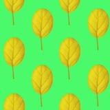 Nahtloses Muster des Gelbs verlässt auf einem grünen Hintergrund Stockbilder