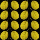 Nahtloses Muster des Gelbs verlässt auf einem schwarzen Hintergrund Lizenzfreie Stockfotografie