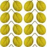 Nahtloses Muster des Gelbs verlässt auf einem weißen Hintergrund Stockfotografie