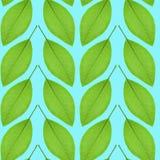 Nahtloses Muster des Grüns verlässt auf einem blauen Hintergrund Lizenzfreie Stockfotografie