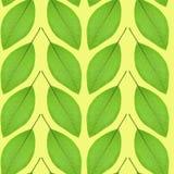 Nahtloses Muster des Grüns verlässt auf einem gelben Hintergrund Stockfoto