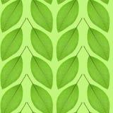 Nahtloses Muster des Grüns verlässt auf einem grünen Hintergrund Lizenzfreies Stockfoto