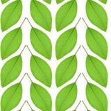 Nahtloses Muster des Grüns verlässt auf einem weißen Hintergrund Stockfotografie