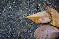 Nahtloses Muster des Herbstes Lizenzfreies Stockfoto