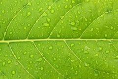 Nahtloses Muster des Herbstes Lizenzfreie Stockbilder