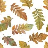 Nahtloses Muster des Herbstlaubs auf einem wei?en Hintergrund vektor abbildung