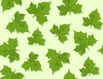 Nahtloses Muster des Hintergrundes der grünen Blätter Stockfotos