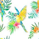 Nahtloses Muster des Keilschwanzsittichs Palmblätter und tropische Blume, Kamelien Tropischer Papagei exotisch Stockbilder