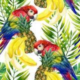 Nahtloses Muster des Papageien Stockbild
