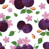 Nahtloses Muster des Pflaumenblüten-Vektors Stockbilder