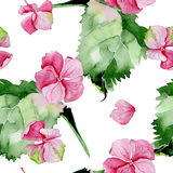 Nahtloses Muster des rosa Hortensieaquarells Stockfotografie