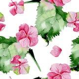 Nahtloses Muster des rosa Hortensieaquarells Stockbilder