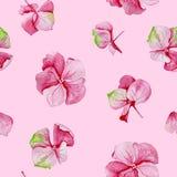 Nahtloses Muster des rosa Hortensieaquarells Stockfoto