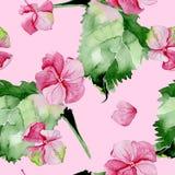 Nahtloses Muster des rosa Hortensieaquarells Stockfotos