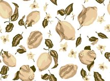 Nahtloses Muster des Sepia mit Zitronenfrüchten und Zitrusfrucht blühendem flo vektor abbildung