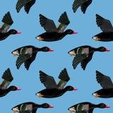Nahtloses Muster des Vektors mit dem Fliegen von schwarzen Enten Stockfotos