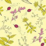 Nahtloses Muster des Vektors mit Hand gezeichneten Kräutern Frühling und Sommerhintergrund Lizenzfreie Stockfotos
