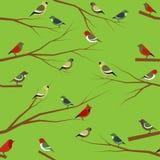Nahtloses Muster des Vektors mit Vögeln Lizenzfreie Stockfotos